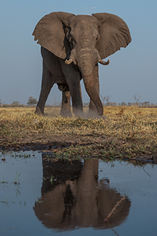 Elephant_reflection_th.jpg